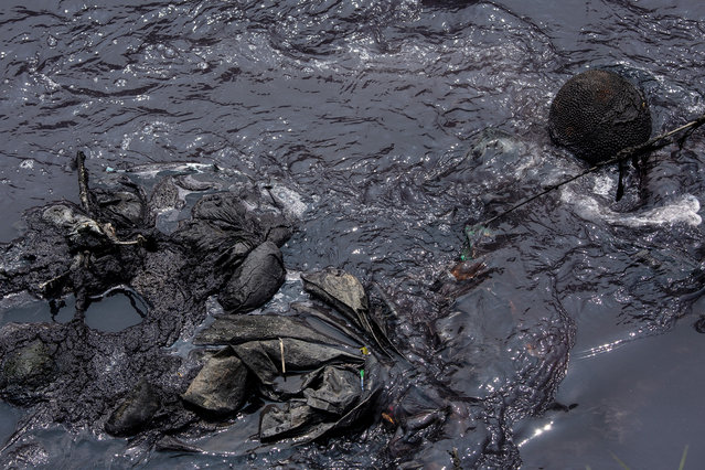 Factory waste including dyes from the many textile factories in the region stain a jackfruit and discarded cloth on a tributary of the Citarum river on August 27, 2018 outside Bandung, Java, Indonesia. (Photo by Ed Wray/Getty Images)