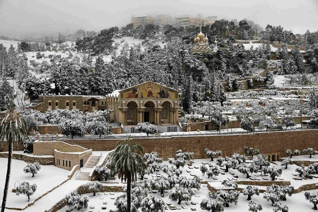 Snow covers the Garden of Gethsemane at the foot of the Mount of Olives in Jerusalem February 20, 2015. (Photo by Ronen Zvulun/Reuters)