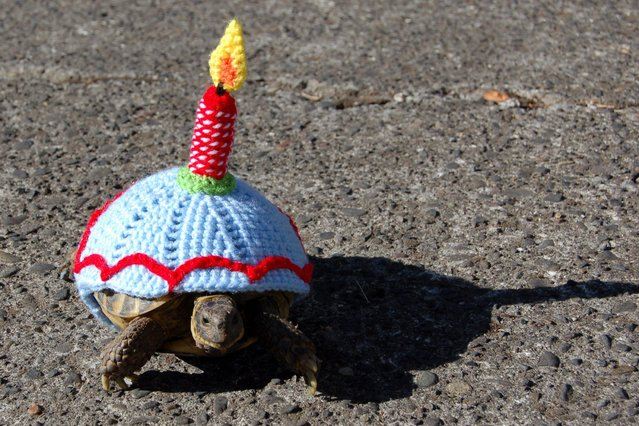 Tortoise Art by Katie Bradley: a tortoise lover has created new shell suits for her pets. (Photo by Solent News & Photo Agency)