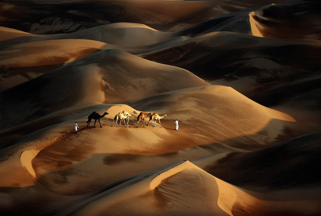 Tribesmen lead their camels through the sand dunes of the Liwa desert, 220 kms west of Abu Dhabi, on November 23, 2013. (Photo by Karim Sahib/AFP Photo)