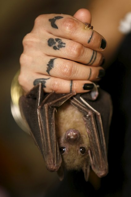 Israeli woman, Nora Lifschitz, 28, holds an injured Egyptian fruit bat at her home in Tel Aviv February 21, 2016. (Photo by Baz Ratner/Reuters)
