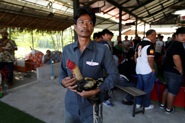 A man is seen with a rooster before a fight during an event organised to celebrate the Lunar New Year and the year of the Rooster on the outskirts of Bangkok, Thailand January 29, 2017. (Photo by Jorge Silva/Reuters)