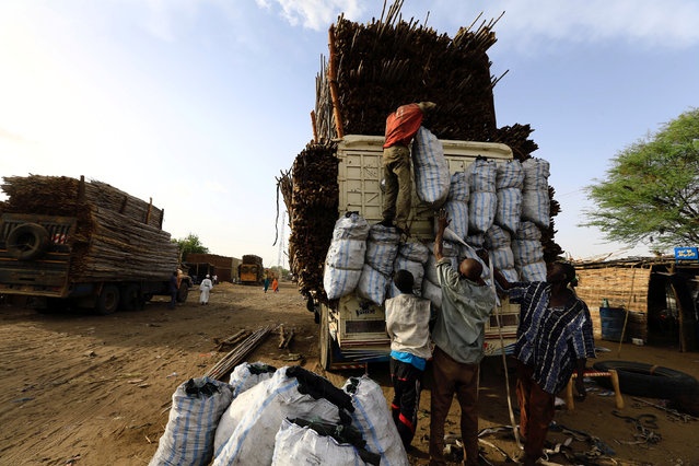 Workers load sacks of charcoal onto a truck carrying wood from Central Africa in Um Dafuq, Sudan May 29, 2017. (Photo by Mohamed Nureldin Abdallah/Reuters)