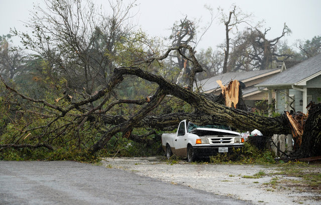 A car crushed by a huge tree in Rockport on August 26, 2017. (Photo by Rick Wilking/Reuters)