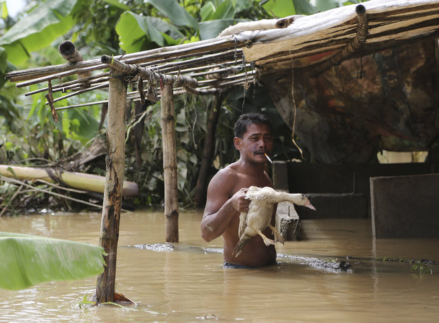 A Filipino holds a duck outside his house as a swollen river slowly recedes in suburban Quezon city, Philippines Monday, September 15, 2014. Fast-moving typhoon Kalmaegi blew out of the northern Philippines Monday after causing flash floods and landslides. Three people died when big waves and strong winds sank a stalled ferry over the weekend. (Photo by Aaron Favila/AP Photo)