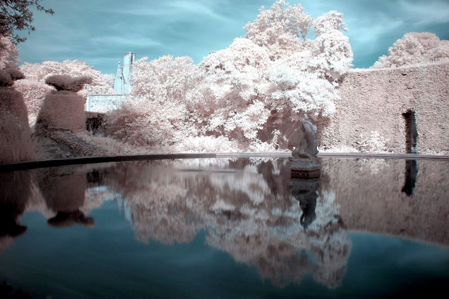 Hidcote Manor gardens near Chipping Campden pictured in infra-red. These are the stunning images of what looks like a picturesque winter wonderland – but actually shot in the middle of summer. Amateur photographer Catherine Perkinton, 45, has spent the summer travelling around the country to create the fabulous images by utilising infra-red. (Photo by Catherine Perkinton/SWNS/ABACAPress)