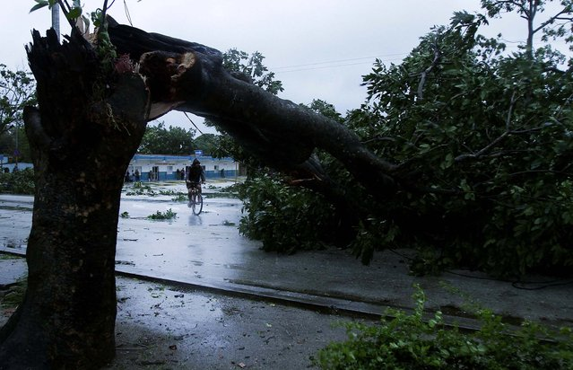A man rides his bicycle under the arc made by a tree knocked down by Hurricane Sandy in Gibara, Cuba. (Photo by Franklin Reyes/Associated Press)