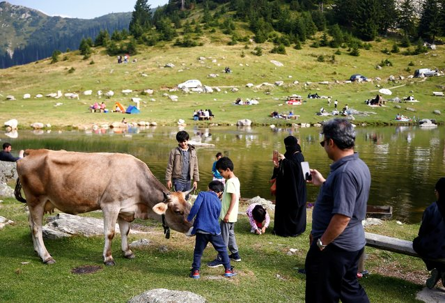Tourists from the Middle East take pictures of a cow along the Prokosko Lake near Fojnica, Bosnia and Herzegovina, August 20, 2016. (Photo by Dado Ruvic/Reuters)