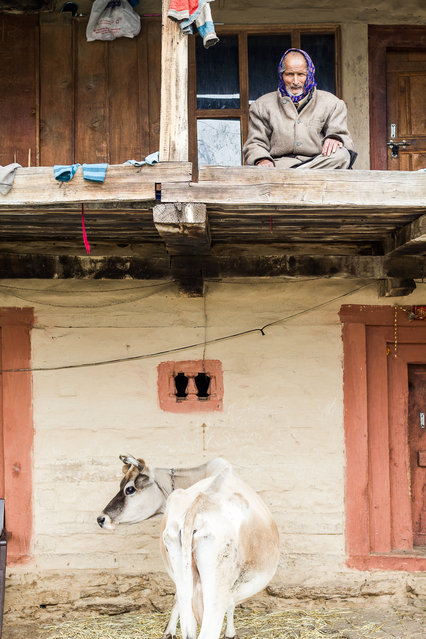 """Mr. X from Burwa"". Mr. X from Burwa (Himachal Pradesh, India) sits proud on the terrace of his house. Underneath is his cow, posing perfectly. Photo location: Burwa, Himachal Pradesh, India. (Photo and caption by Oliver Schranz/National Geographic Photo Contest)"