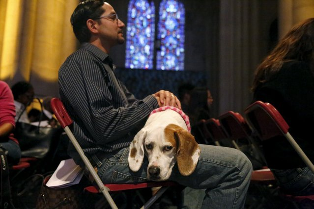 Luis Zapata and dog, Binky, attend the 31st annual Feast of Saint Francis and Blessing of the Animals at The Cathedral of St. John the Divine in the Manhattan borough of New York on October 4, 2015. (Photo by Elizabeth Shafiroff/Reuters)
