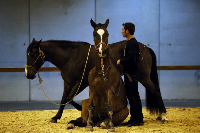 Miron Bococi practices with his horses before performing during Madrid Horse Week in Madrid November 28, 2014. Madrid Horse Week is an equestrian show that includes the Longines World Cup Show Jumping as well as non-competitive activities such as horse vaulting, horse carriage shows, pony races and horseball games. (Photo by Susana Vera/Reuters)