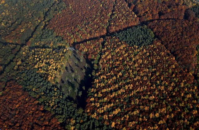 An aerial view shows a mixed forest on a sunny autumn day in Recklinghausen, Germany, October 31, 2015. (Photo by Ina Fassbender/Reuters)
