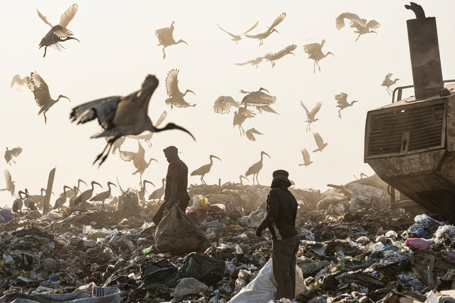 Recyclers and birds scour the Robinson Deep landfill at the edge of the city Johannesburg, South Africa on April 29, 2018. (Photo by Graham De Lacy/Greatstock/Barcroft Images)