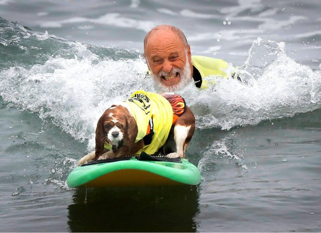"""Don Horn of Orinda in Northern California and """"Delilah"""" competed during the 2018 Imperial Beach Surf Dog Competition next to the Imperial Beach Pier in San Diego, California on July 28, 2018. (Photo by Howard Lipin/San Diego Union-Tribune via ZUMA Press/Rex Features/Shutterstock)"""