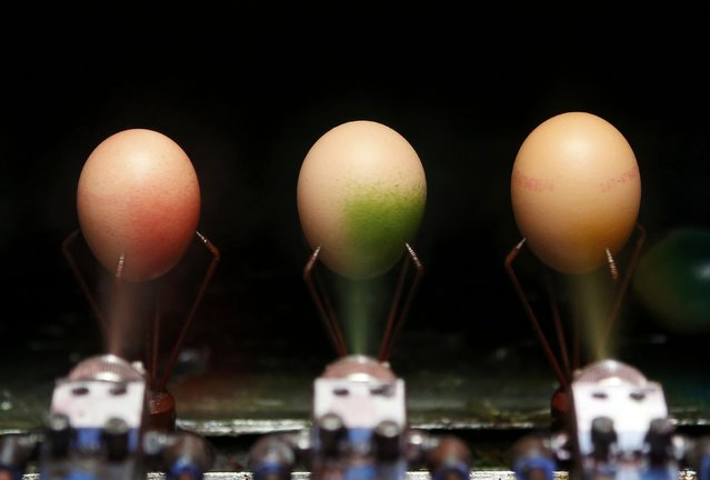 Cooked eggs are coloured on the production line at the Schrall coloured eggs company in the Austrian Village of Diendorf March 16, 2015. (Photo by Leonhard Foeger/Reuters)