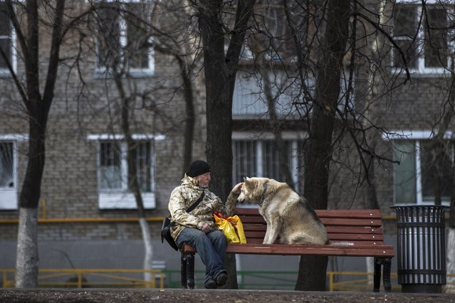 A man pets his dog on a bench in Moscow, Russia, Thursday, April 23, 2015, as they both enjoy a warm spring sun. It's not very warm in Moscow for this time of the year, about  9 °C (48 F)  which is 3-4 degrees less normal. (Photo by Pavel Golovkin/AP Photo)