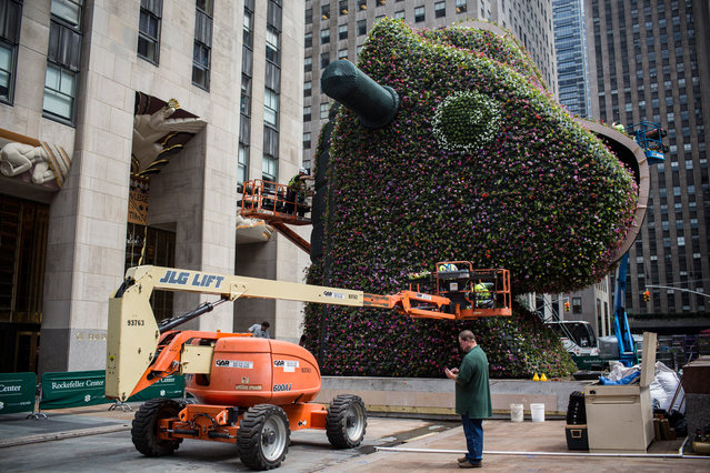 """Split-Rocker"" a 37-foot tall flower sculpture by artist Jeff Koons, is assembled by workers outside Rockefeller Center on June 17, 2014 in New York City. The sculpture depicts a half toy pony, half toy horse. (Photo by Andrew Burton/Getty Images)"