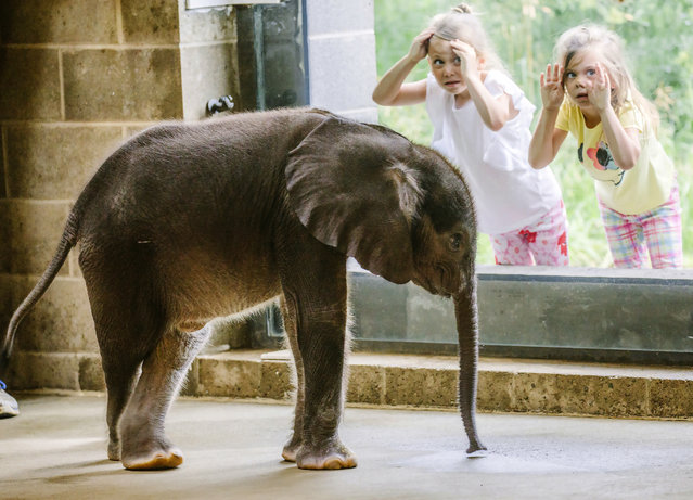 In this Friday, July 7, 2017 photo, young visitors view the Pittsburgh Zoo & PPG Aquarium's 4-week-old baby elephant as it meets the public for the first time at the elephant family room in Pittsburgh. (Photo by Andrew Rush/Pittsburgh Post-Gazette via AP Photo)
