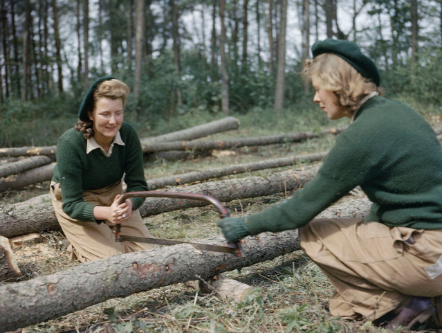 Land Army members sawing larch poles for use as pit props at the Women's Timber Corps training camp at Culford, Suffolk, 1943. (Photo by IWM/PA Wire)