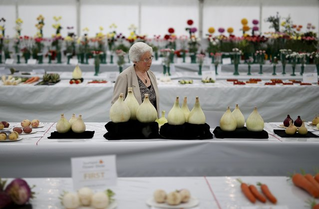 A woman admires a display of giant onions at the Southport Flower Show in Southport, Britain August 21, 2015. The show which started in 1924 is held annually for four days in August and is the largest independent flower show in Britain. (Photo by Andrew Yates/Reuters)