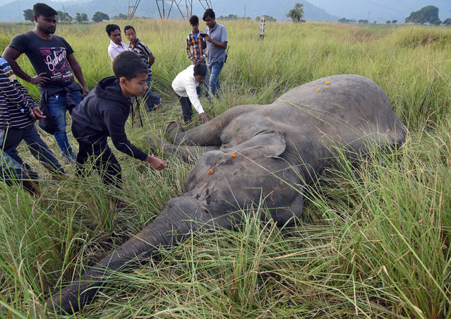 People touch the carcass of an elephant after it was hit by a train while crossing a railway track, according to forest officials, in Thakurkuchi village on the outskirts of Guwahati, India, November 19, 2017. (Photo by Anuwar Hazarika/Reuters)