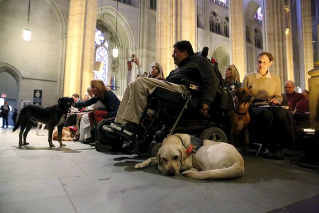Churchgoers with their pets attend the 31st annual Feast of Saint Francis and Blessing of the Animals at The Cathedral of St. John the Divine in the Manhattan borough of New York on October 4, 2015. (Photo by Elizabeth Shafiroff/Reuters)