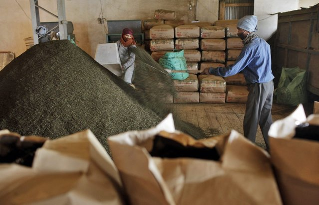 In this Sunday, November 16, 2014 photo, Nepalese workers collect fine tea leaves after they are processed at Kanyam Tea Factory in Illam district, around 500 kilometers (310 miles) from Katmandu, Nepal. (Photo by Niranjan Shrestha/AP Photo)