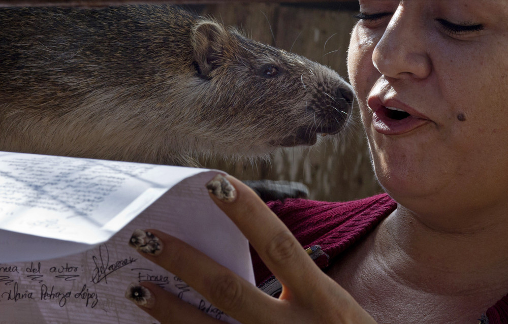 Cuban Couple Keeps Rodents Called Hutias as Pets