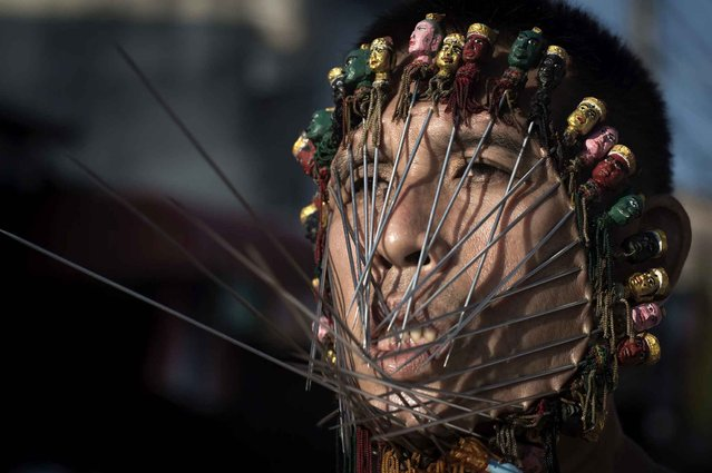 A devotee of the Chinese Jui Tui Shrine has his face pierced with metal rods during a street procession during the annual Vegetarian Festival in the southern Thai town of Phuket on October 19, 2015. During the festival, which begins on the first evening of the ninth lunar month and lasts nine days, religious devotees slash themselves with swords, pierce their cheeks with sharp objects and commit other painful acts to purify themselves, taking on the sins of the community. (Photo by Nicolas Asfouri/AFP Photo)