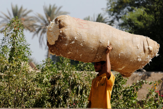 A worker carries a sack full of cotton at the agricultural road which leads to the capital city of Cairo, Egypt October 13, 2016. (Photo by Amr Abdallah Dalsh/Reuters)