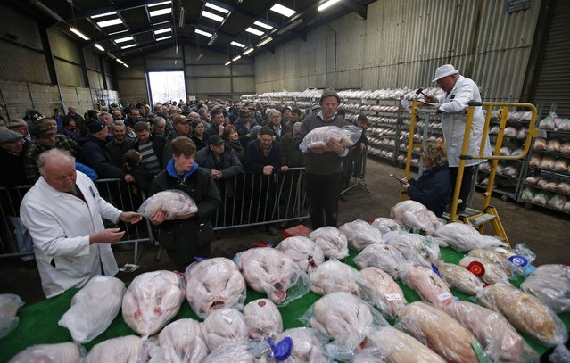 Auctioneer Roy Waller (R) starts the bidding during the Turkey and dressed poultry auction at Chelford Market, northern England December 22, 2014. (Photo by Phil Noble/Reuters)