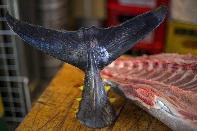 The fin of a tuna is seen on display in the outer part of the Tsukiji fish market, the Jogai Shijo, in Tokyo January 4, 2015. The famous Tsukiji wholesale fish and seafood market, is scheduled to leave its fabled 80-year-old halls to move into bigger, more modern facilities next year ahead of the 2020 Tokyo Olympics. (Photo by Thomas Peter/Reuters)