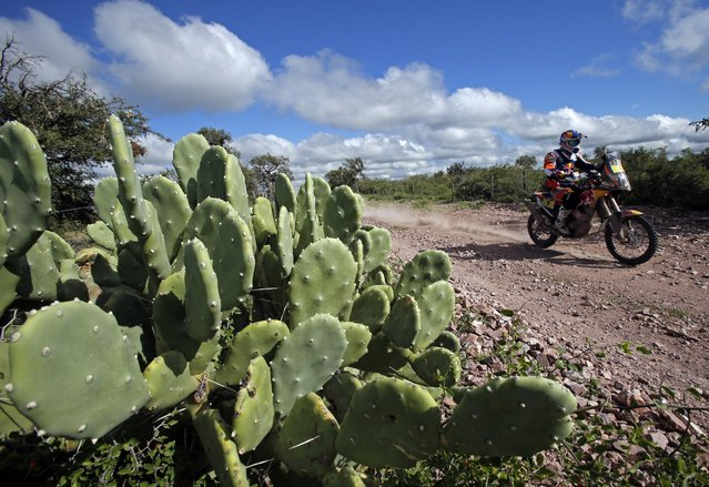 KTM rider Marc Coma of Spain rides during the 12th stage of the Dakar Rally 2015 from Termas de Rio Hondo to Rosario January 16, 2015. (Photo by Jean-Paul Pelissier/Reuters)