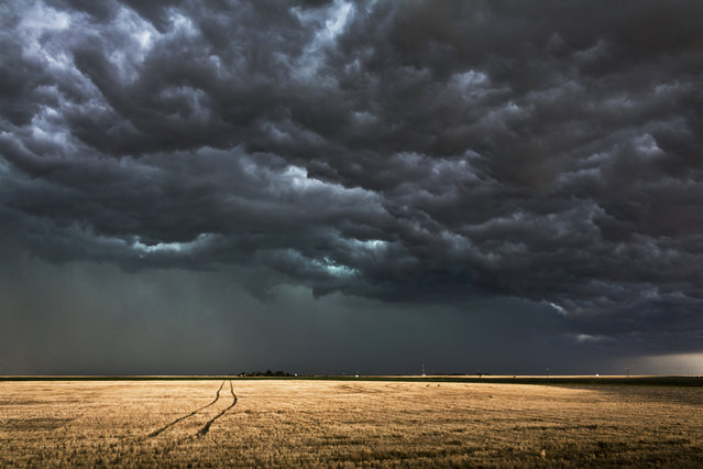 Tracks through the field, Kansas. (Photo by Camille Seaman/Caters News)