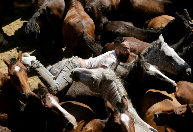"A reveller tries to hold on to a wild horse during the ""Rapa das Bestas"" traditional event in the village of Sabucedo, northwestern Spain July 9, 2018. (Photo by Miguel Vidal/Reuters)"