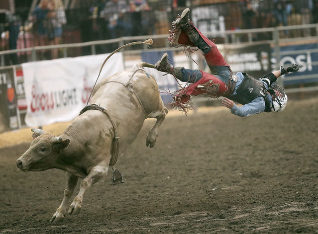 Bull rider Trey Benton III, of Rock Island, Texas, soars through the air off the back of a bull named Single Wide during the PRCA Xtreme Bulls at the Kitsap County Fair & Stampede in Silverdale, Washington on Wednesday, August 22. 2018. (Photo by Meegan M. Reid/Kitsap Sun via AP Photo)