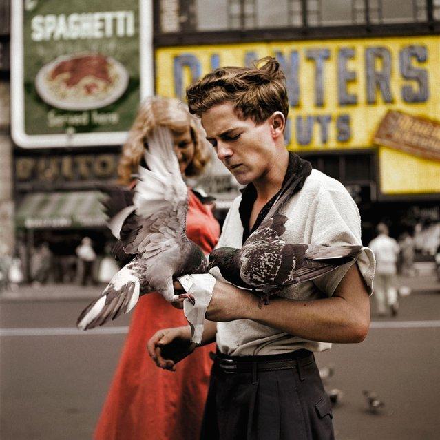 Pigeon Feeder c.1955.