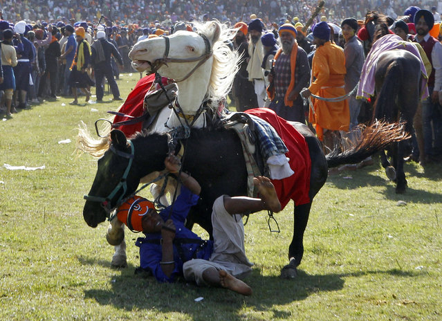 """A """"Nihang"""", or a Sikh warrior, falls from two horses while performing during the Holla Mohalla festival in Anandpur Sahib in the northern Indian state of Punjab March 6, 2015. """"Hola Mohalla"""", or the festival of Nihangs, is celebrated during the festival of Holi, marking the congregation of Sikh devotees from all over the country. (Photo by Ajay Verma/Reuters)"""