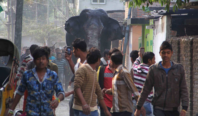 A wild elephant that strayed into the town moves through the streets as people follow at Siliguri in West Bengal state, India, Wednesday, February 10, 2016. (Photo by AP Photo)
