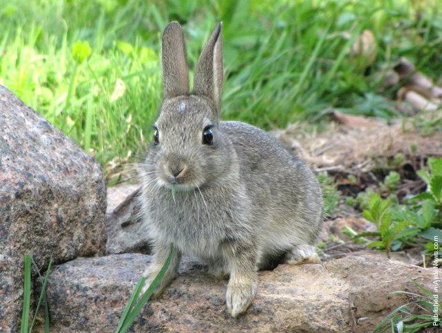 Bunny Baby