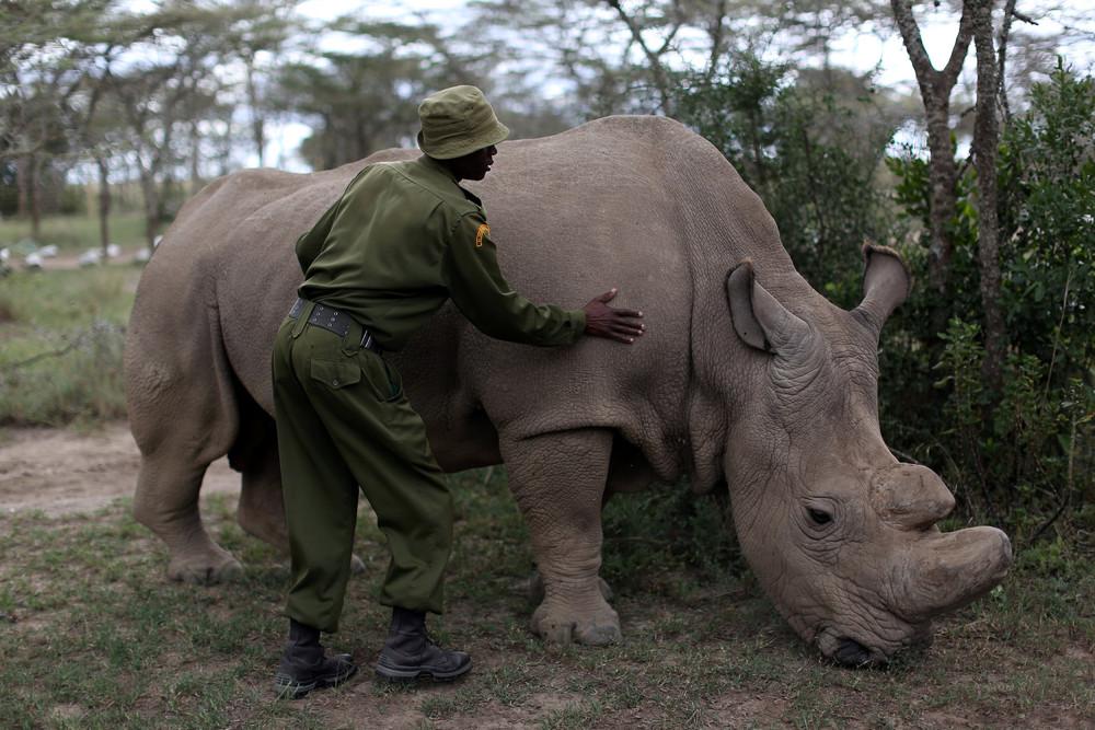 Tackling Poaching in Kenya