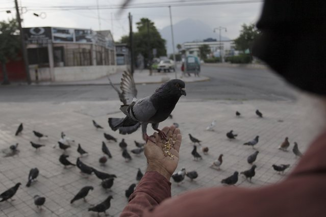 A pigeon stands on the hand of 60-year-old Jesus Moreno in downtown Monterrey, Mexico July 7, 2015. (Photo by Daniel Becerril/Reuters)