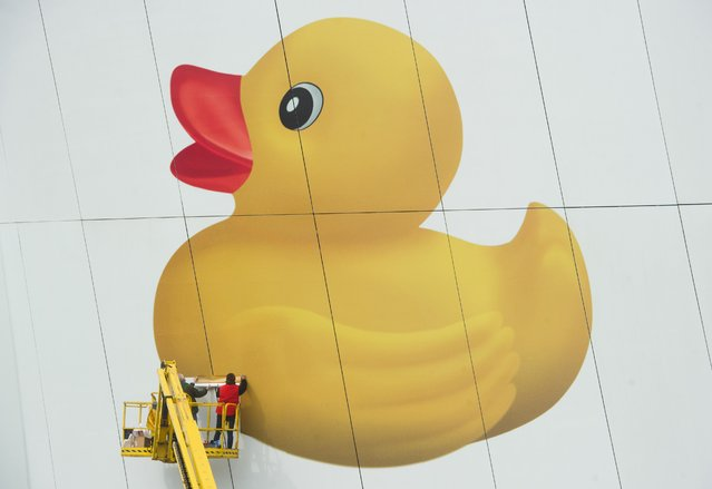 "Workers fix the picture of a giant rubber duck on the facade of the Ozeaneum ocean museum in Stralsund, northeastern Germany, on May 6, 2014. A 120 square meters big exhibition element titled ""Humboldt penguin meets rubber duck"" on the museum's facade aims to draw attention on its project year ""No Plastic in Oceans"". (Photo by Stefan Sauer/AFP Photo/DPA)"