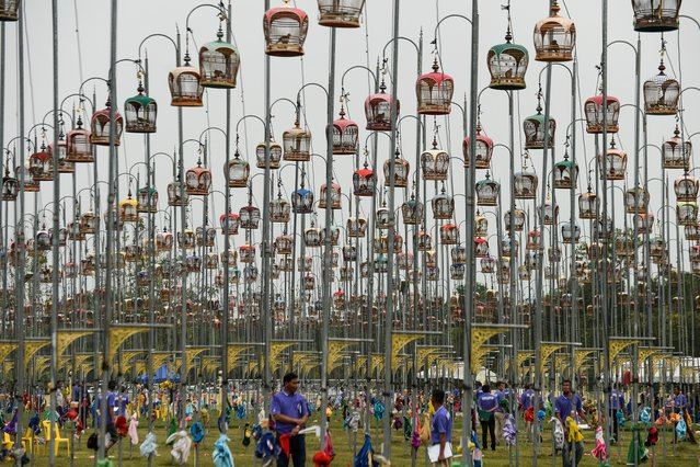Birds sit in their cages during the annual bird-singing competition in Thailand's southern province of Narathiwat on September 22, 2019. Over 1,800 birds from Thailand, Malaysia and Singapore took part in the contest. (Photo by Madaree Tohlala/AFP Photo)