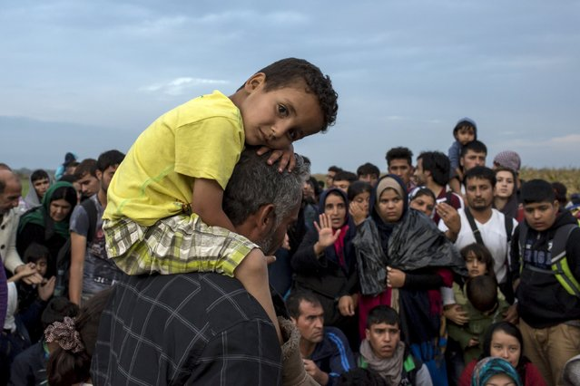 A migrant from Syria carries a child on his shoulders after crossing into Hungary from the border with Serbia near the village of Roszke, September 5, 2015. (Photo by Marko Djurica/Reuters)