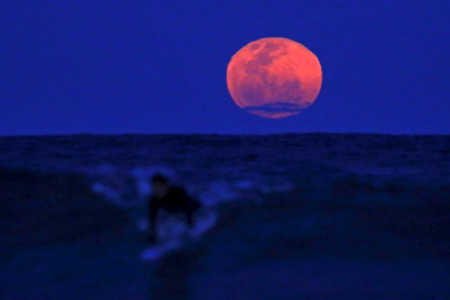 A surfer catches a wave on his board as a super moon rises in the sky off Manly Beach in Sydney, Australia, September 28, 2015. The astronomical event occurs when the moon is closest to the Earth in its orbit, making it appear much larger and brighter than usual. (Photo by David Gray/Reuters)