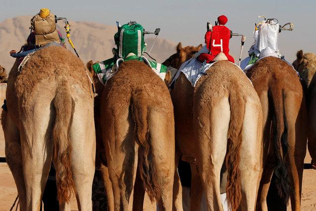 Robot jockeys are seen on camels during a race in Wadi Rum, Jordan, November 2, 2017. (Photo by Muhammad Hamed/Reuters)