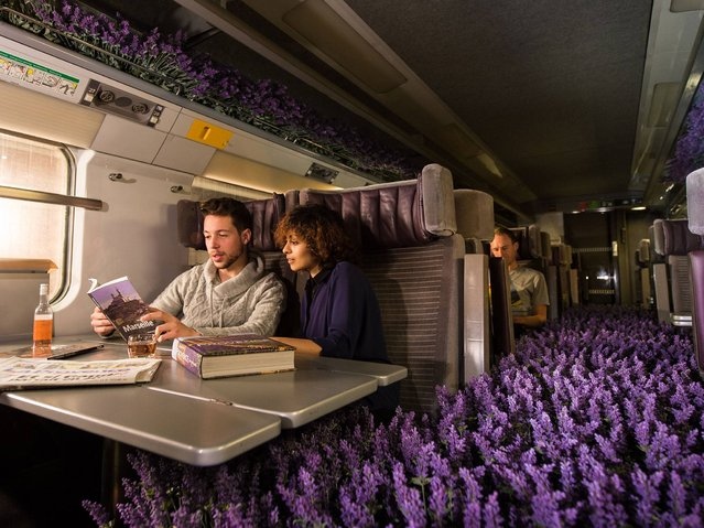 Eurostar celebrated the opening of ticket sales for its new year-round service to Lyon and the South of France by converting one of its carriages into a Provencal lavender field at St Pancras Station on December 11, 2014 in London, England. (Photo by Ian Gavan/Getty Images for Eurostar)