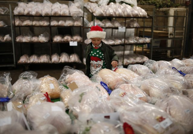 A young boy wearing a Santa hat looks at prize winning birds ahead of the Turkey and dressed poultry auction at Chelford Market, northern England December 22, 2014. (Photo by Phil Noble/Reuters)