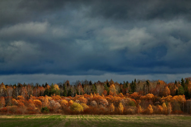 Autumnal colours under a stormy sky in Shileksha, Ivanovo region, Russia on October 17, 2016. (Photo by Vladimir Smirnov/TASS)